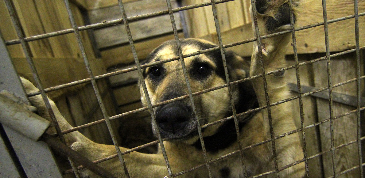 Проблема бездомных животных (перепроизводства животных) была искусственно создана в россии во второй половине