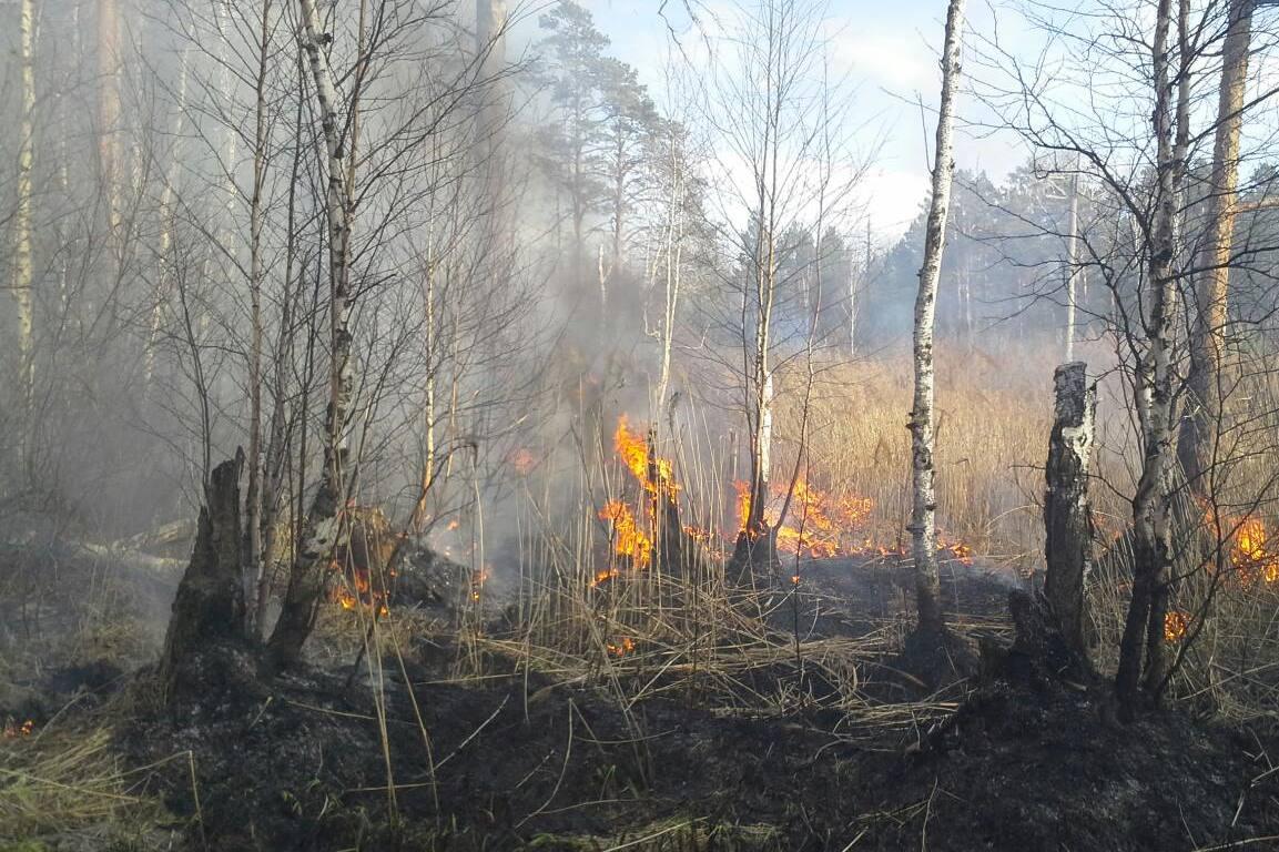 Уральская авиабаза: «В следующем году тушить лесные пожары будет некому и нечем»