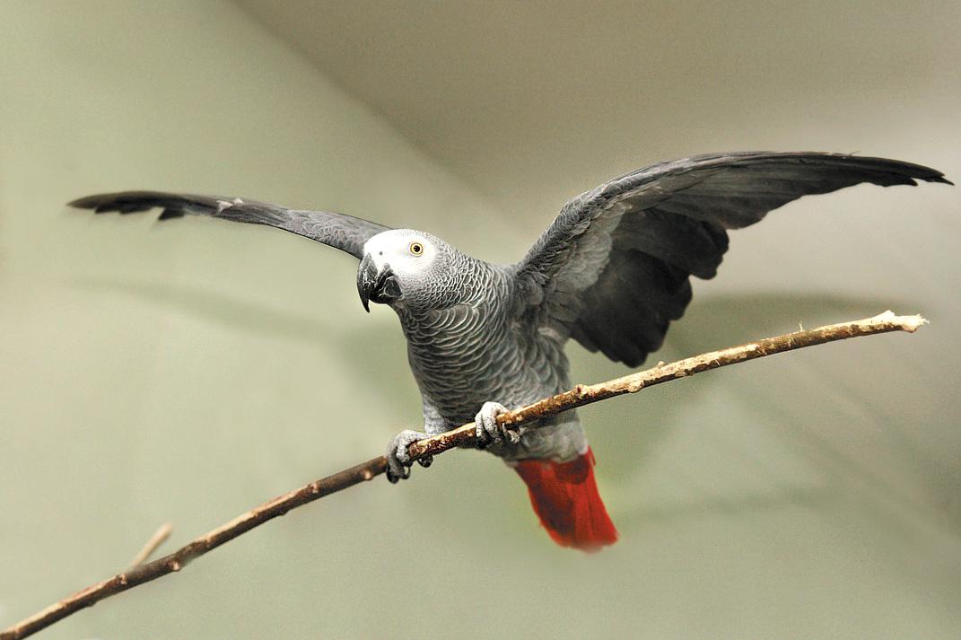 Попугаев и туканов екатеринбургского зоопарка переселили в теплые вольеры