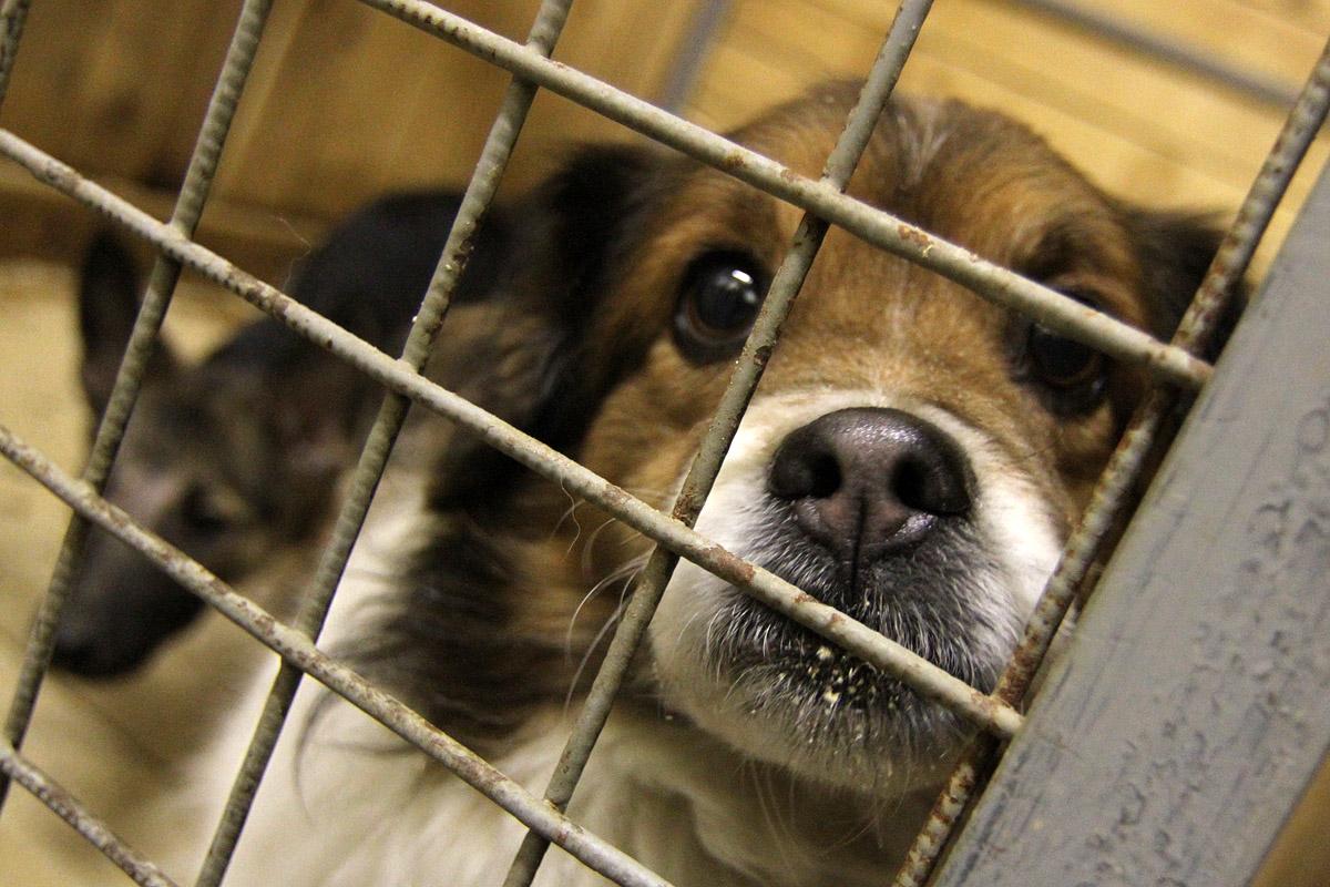 Давайте поможем! В Екатеринбурге собирают вещи для бездомных животных