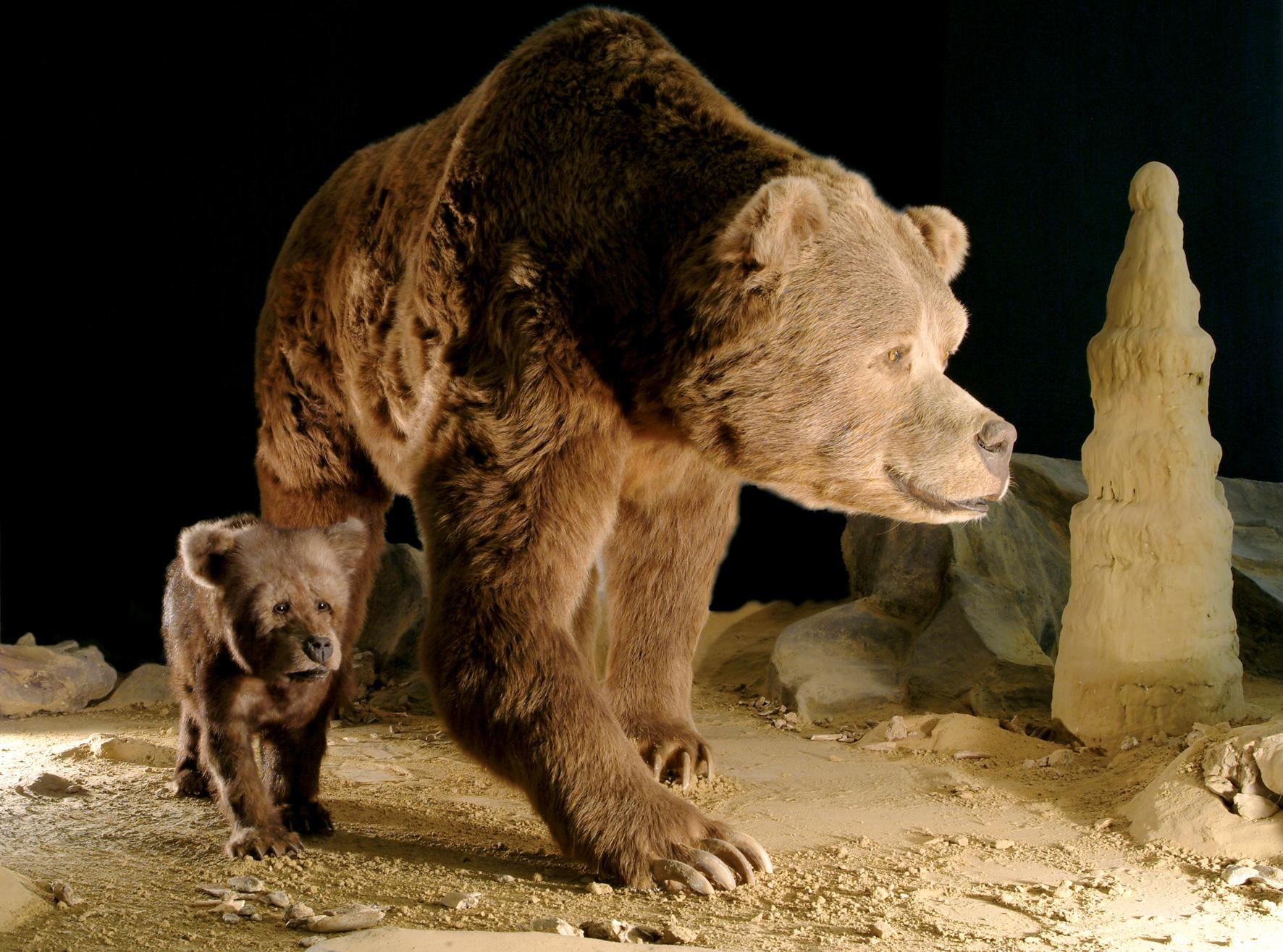 Японские ученые воссоздадут историю появления на Урале пещерных медведей