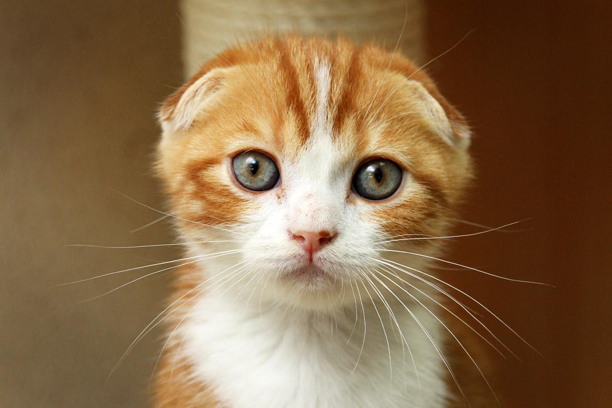У Портала 66.ru и Работы 66 появился свой кот. Настоящий, рыжий