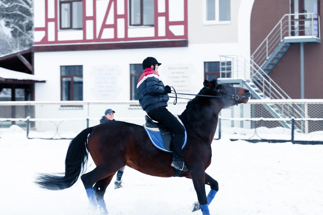 Одна лошадиная сила: тестдрайвим символ наступившего года