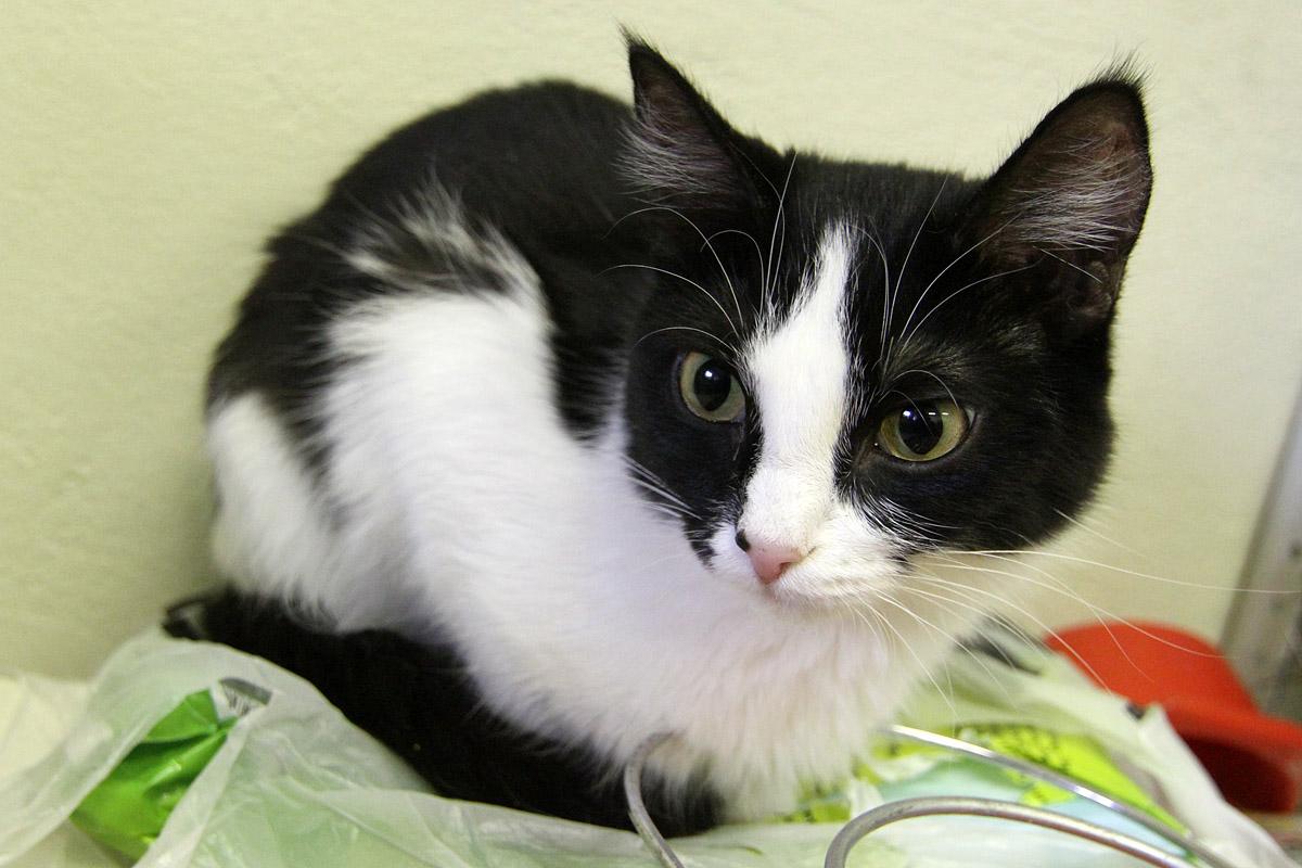 Екатеринбуржцы бьют тревогу: домашние кошки умирают от странной инфекции