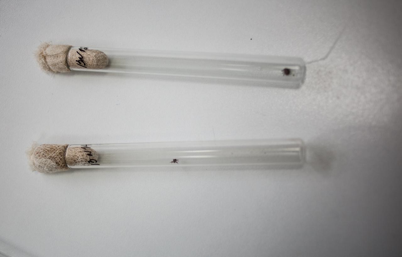 Портал 66.ru исследовал клещей на энцефалит