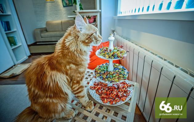 Всех разобрали, один остался. «Кошкин дом» нашел новых хозяев для своих котов
