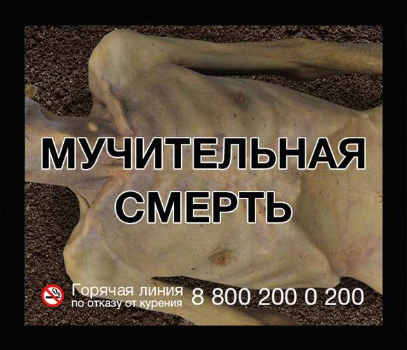 МЧС просит Минздрав разместить на пачках сигарет фото сгоревших курильщиков