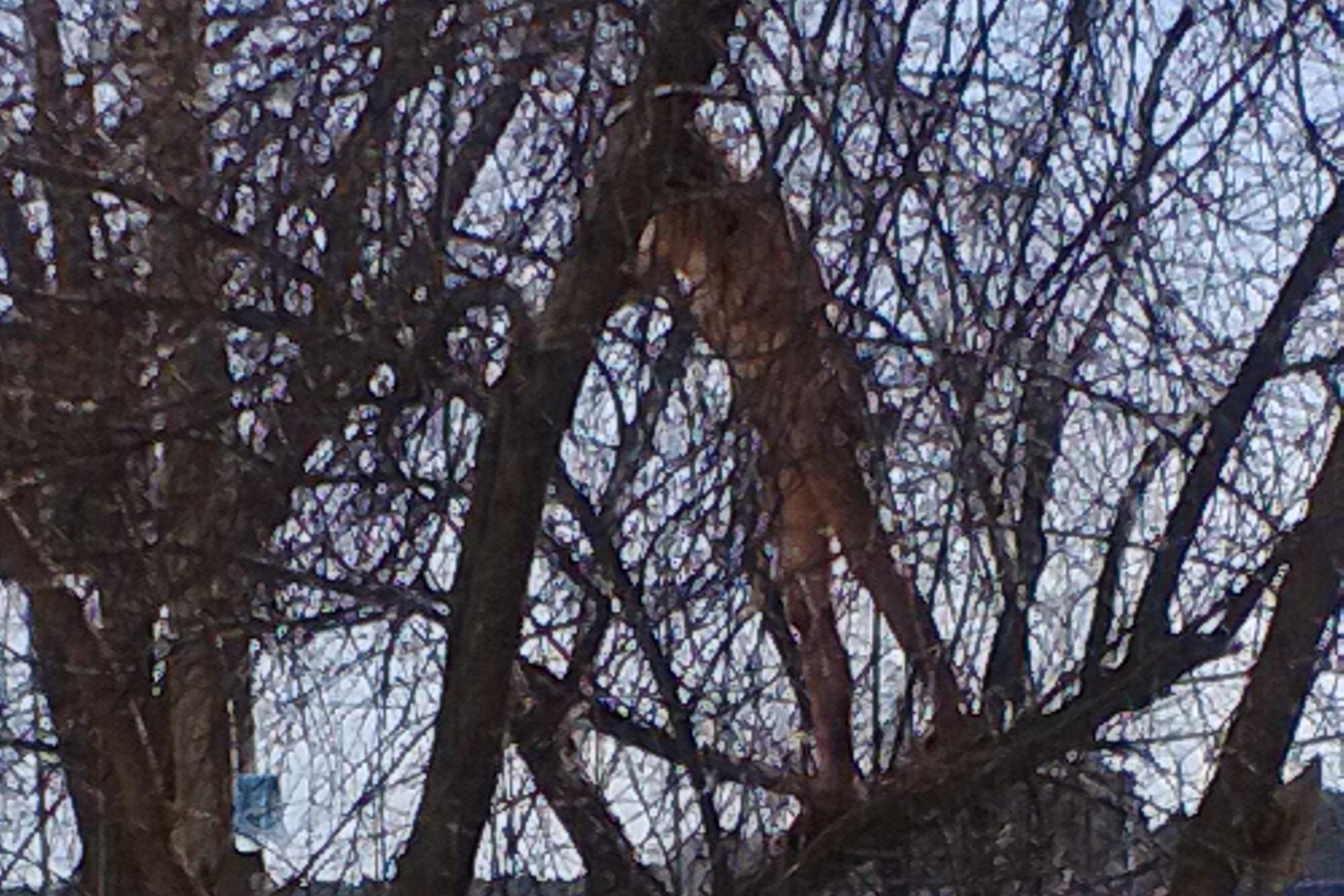 Голая девушка в Екатеринбурге залезла на дерево