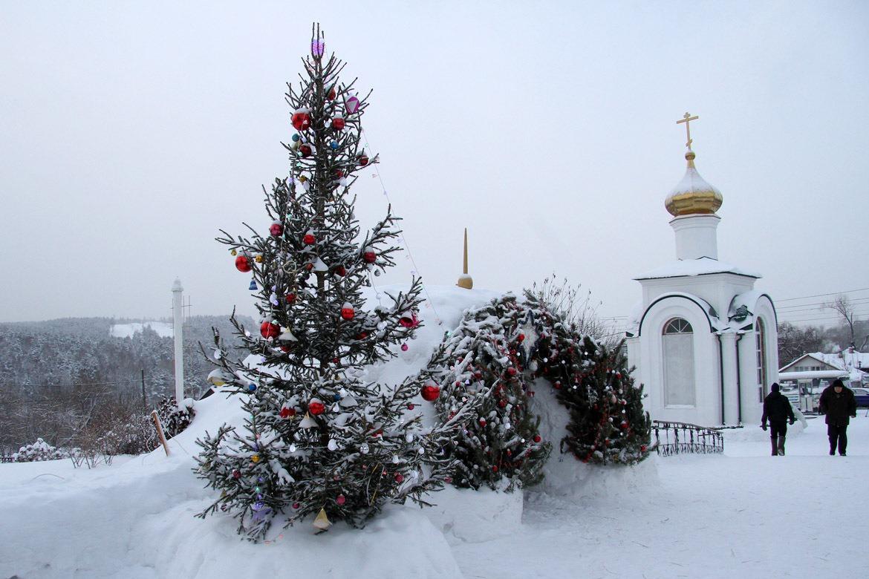 Почем новогоднее настроение: в Екатеринбурге можно купить елку за 28 рублей