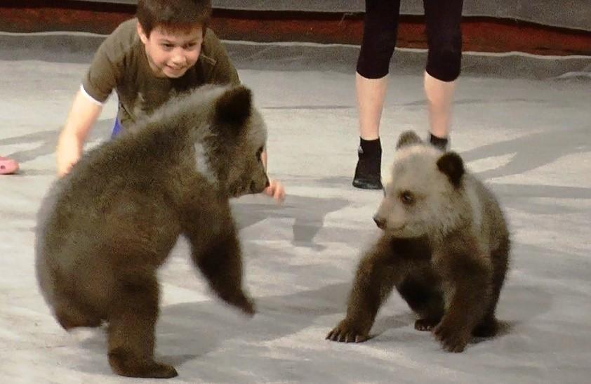 Придумайте мишкам имена: в Екатеринбургский цирк подкинули косолапых малышей
