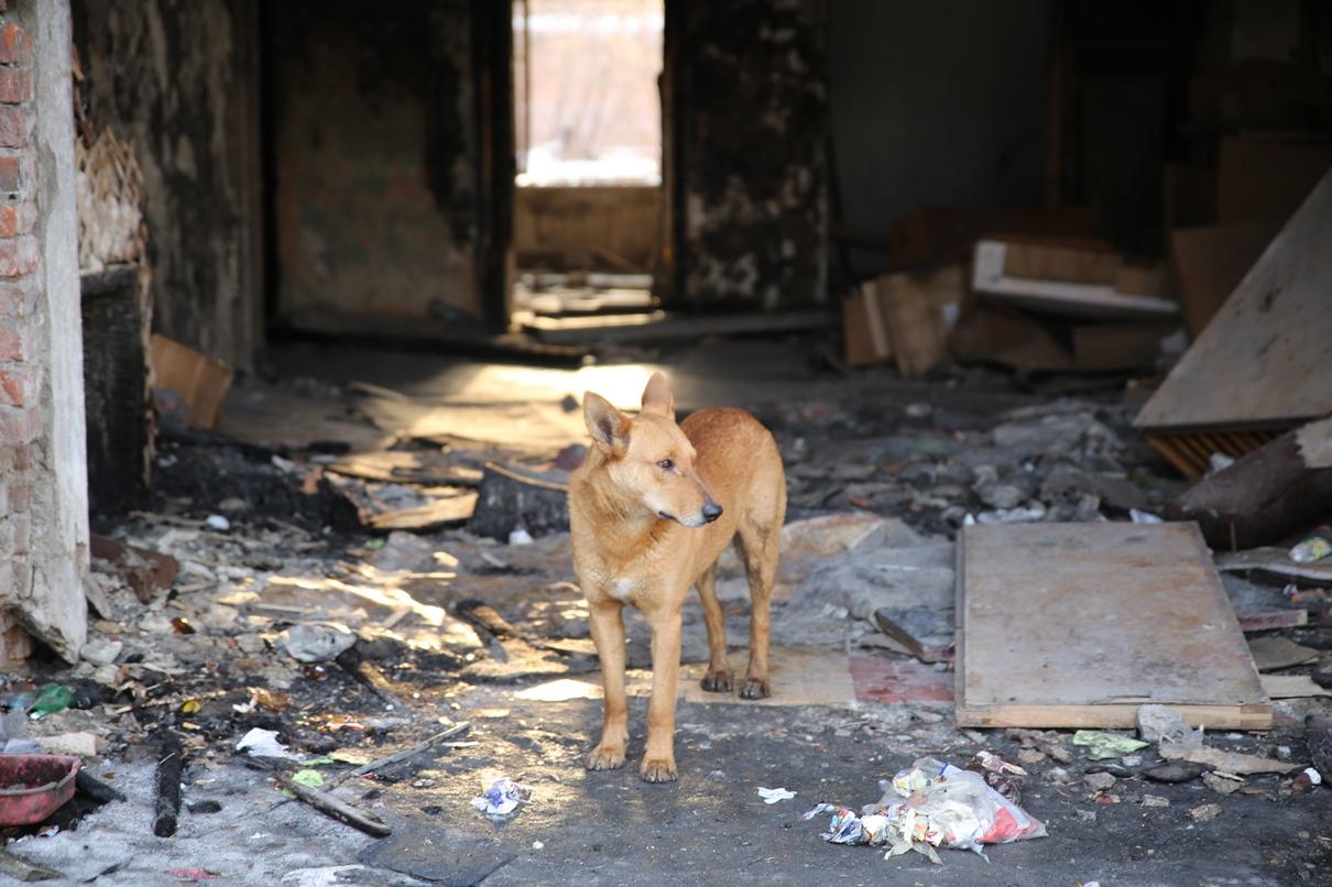 «Я покажу вам дерьмопуть». В Екатеринбурге началась весенняя война с собачьими кучами