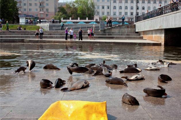 Городская среда: здоровой рыбы в Екатеринбурге нет