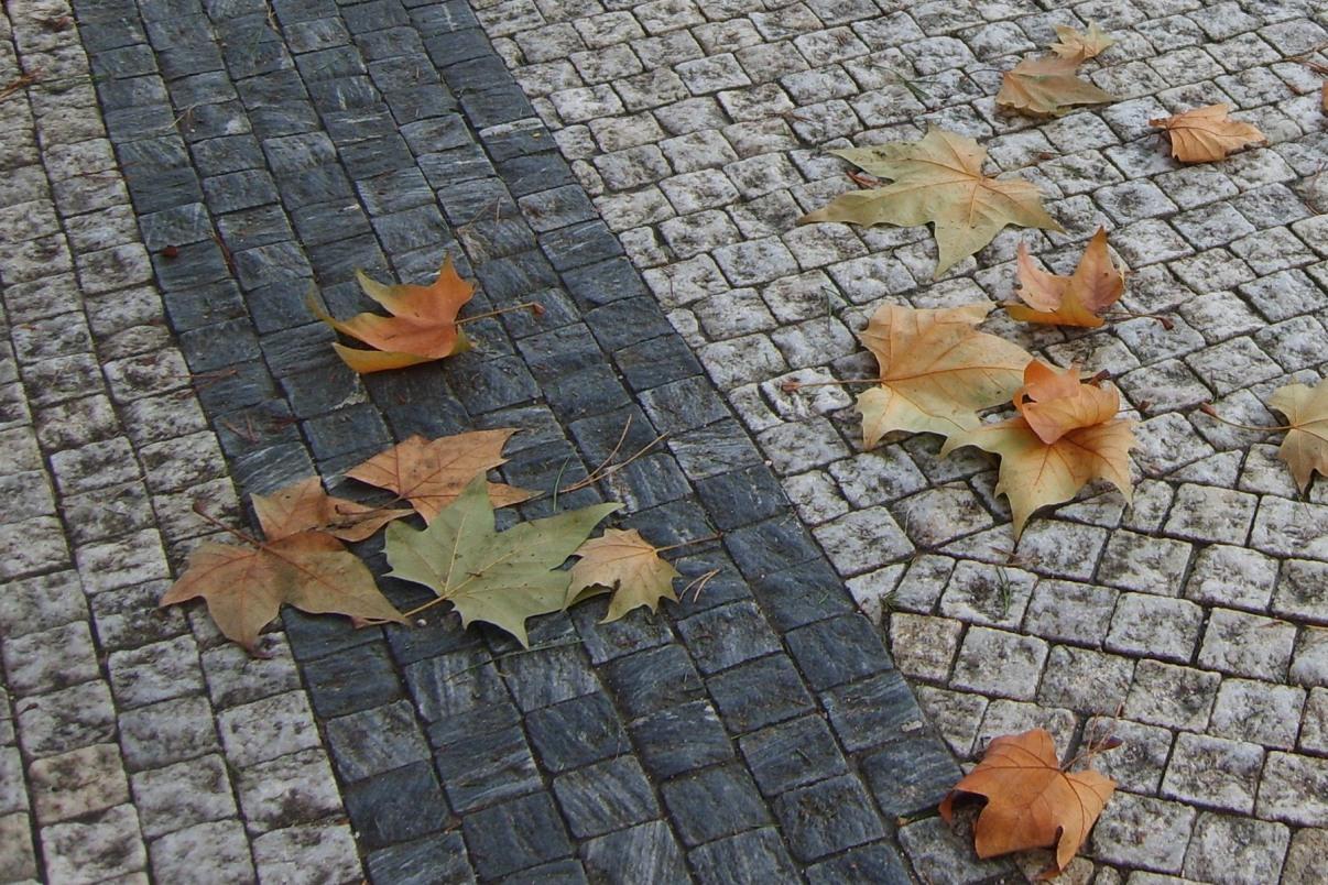 Первая неделя осени в Екатеринбурге будет прохладной и сухой