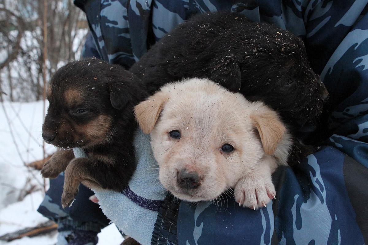 Жизнь звериная: спасаем щенков от смерти