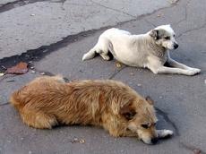 Крупу, предназначенную пациентам свердловских больниц, отдали собакам