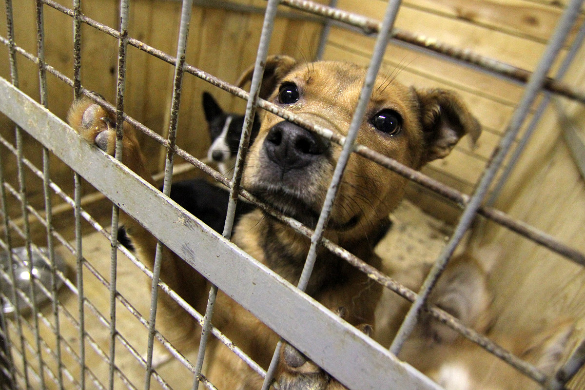«Спецавтобаза» начнет отлов бездомных животных с понедельника