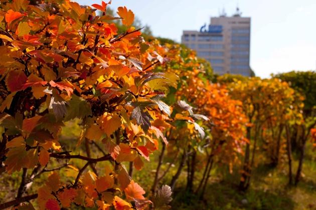 Синоптики ожидают потепления в Екатеринбурге к середине недели