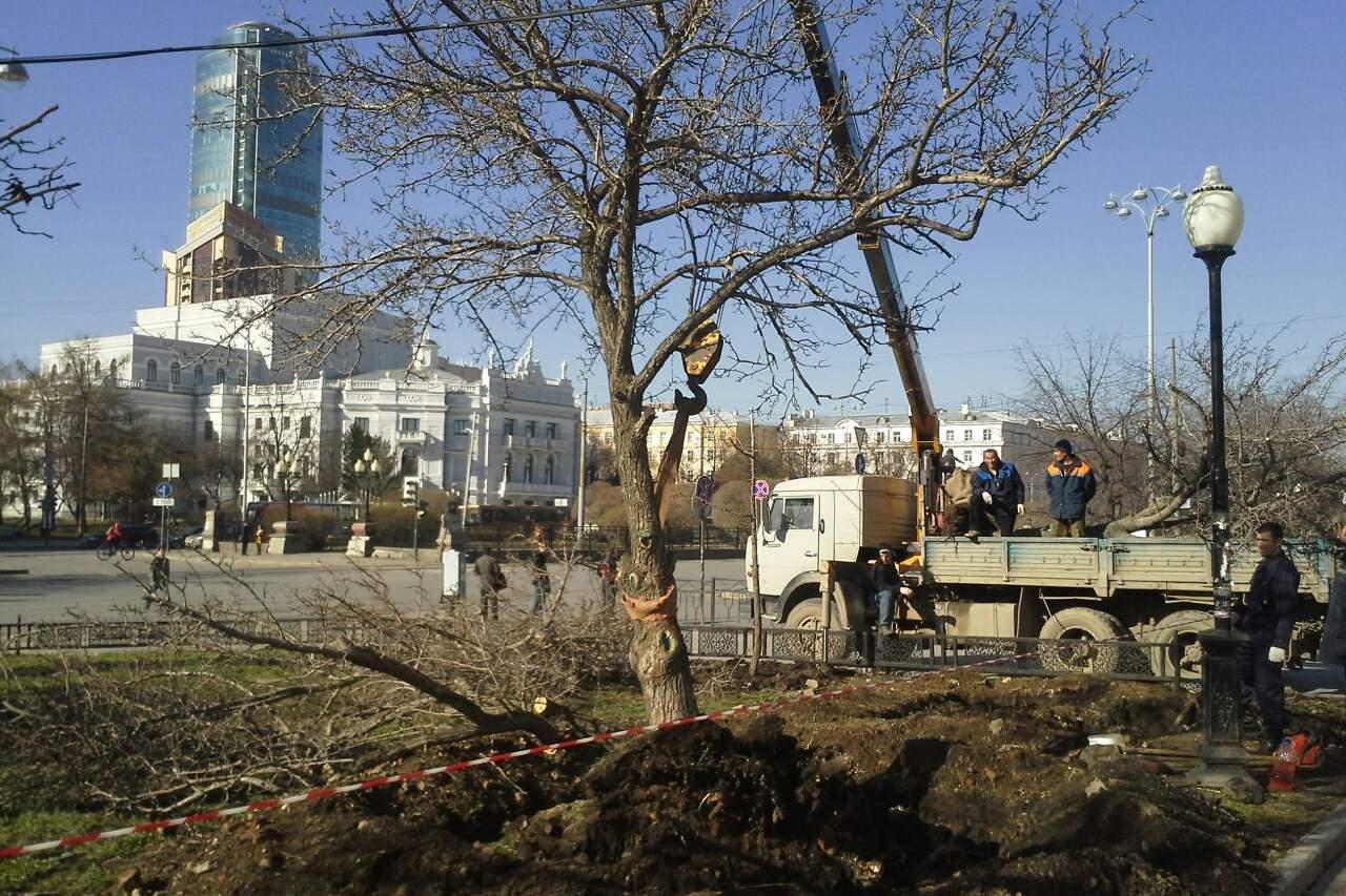 На проспекте Ленина выкорчевали старые груши