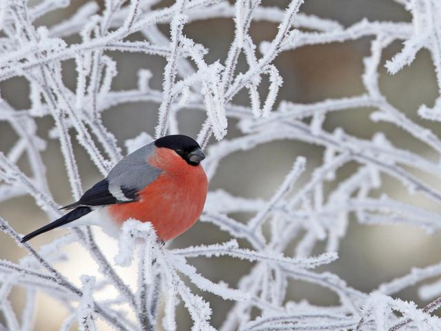 Морозы отступают: в Екатеринбурге вновь потеплеет