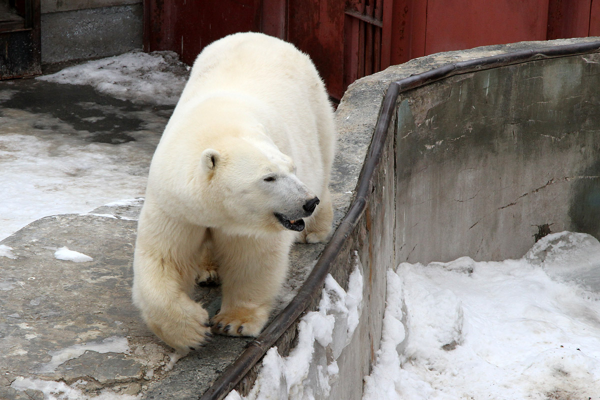 Екатеринбургским медведицам предложили стать суррогатными матерями