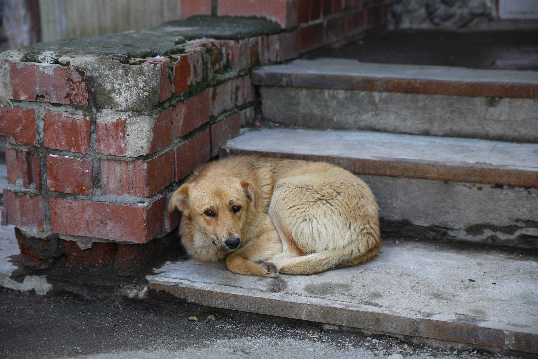 В Первоуральске из-за собачьего бешенства объявлен карантин