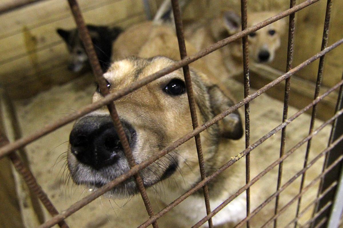 «Спецавтобаза» отловила 306 бездомных животных за месяц