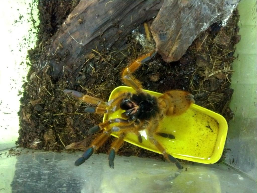 Императорские скорпионы и оранжевые бабуины: в зоопарке Екатеринбурга пополнение