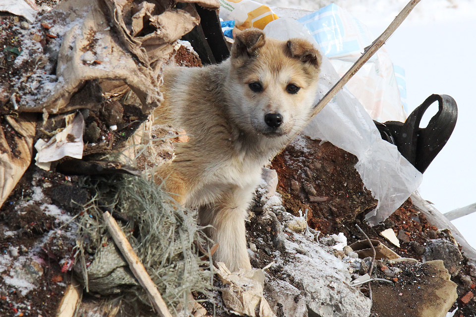 К атаке были готовы: Екатеринбург встал на уши в ожидании убийц собак, а они не пришли