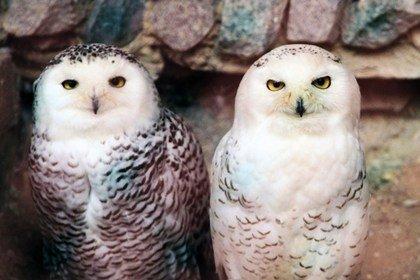 В Екатеринбургском зоопарке в очередной раз выбрали лучшую пару