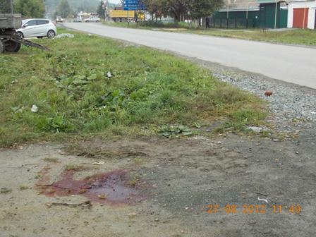 В Сысерти сбитый пешеход несколько часов лежал на дороге