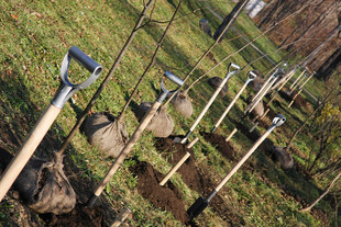 Власти Екатеринбурга заменят старые и больные деревья на новые