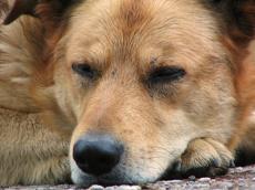«Зоозащита»: дочь выгнала отца из дома в сильный мороз из-за собаки