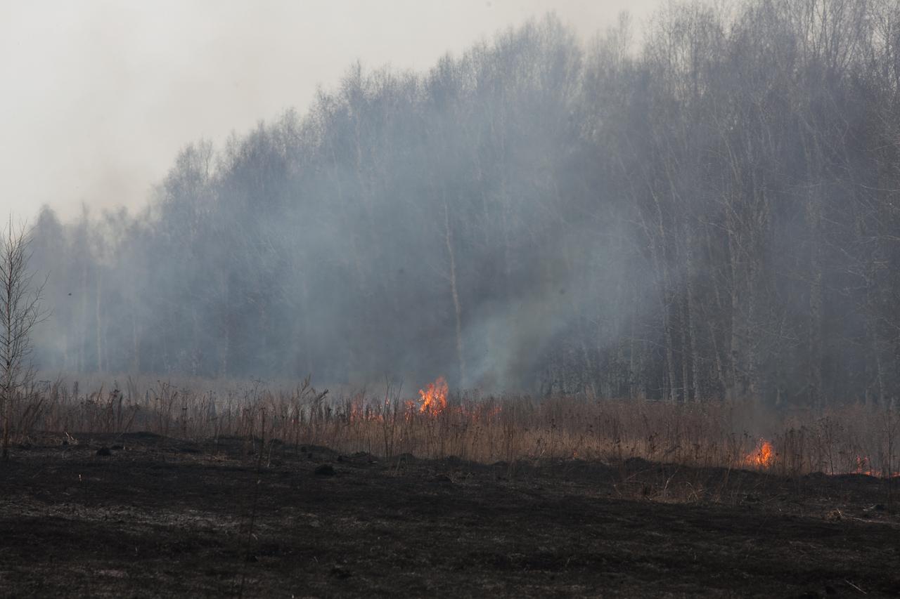 В июле леса Свердловской области полыхали каждый день