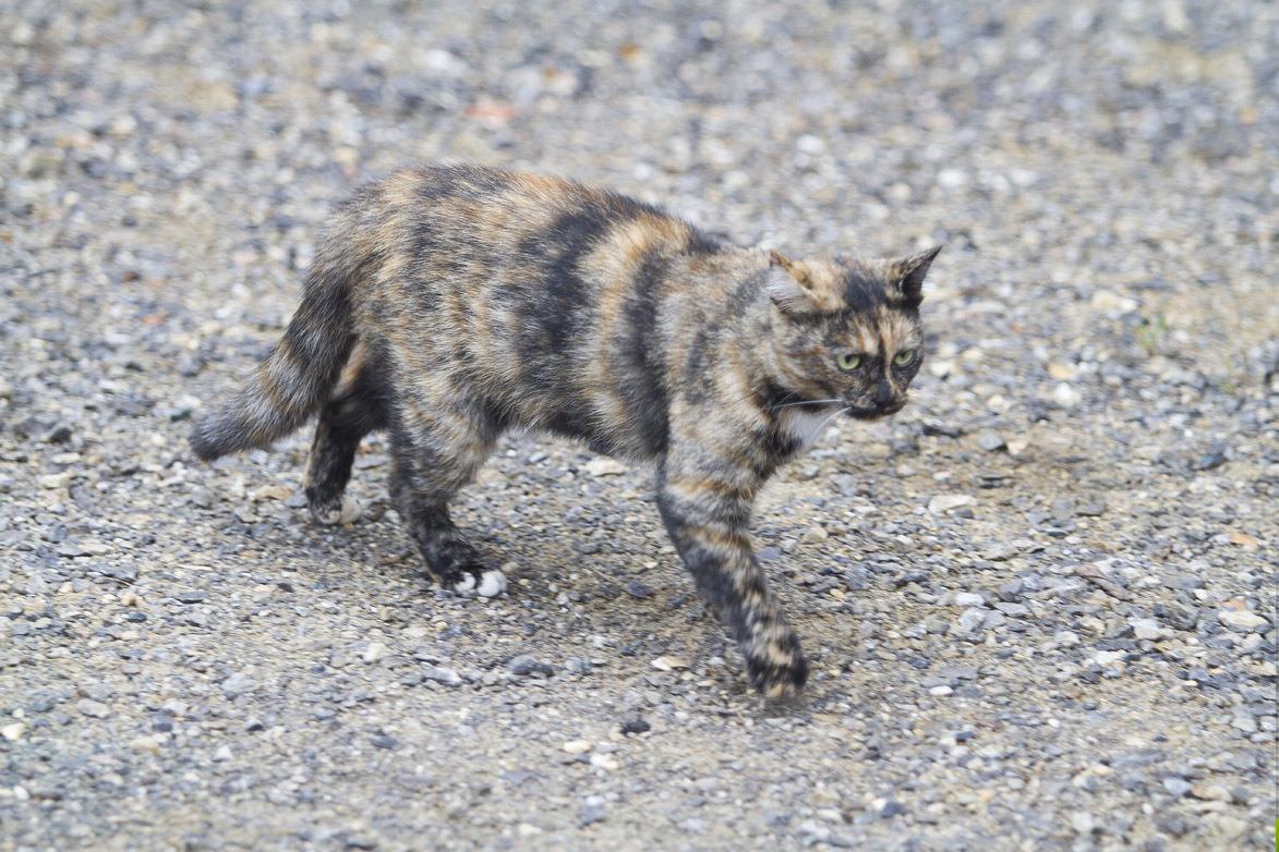 Жителя Серова покусал бешеный кот, пробравшийся к нему в квартиру