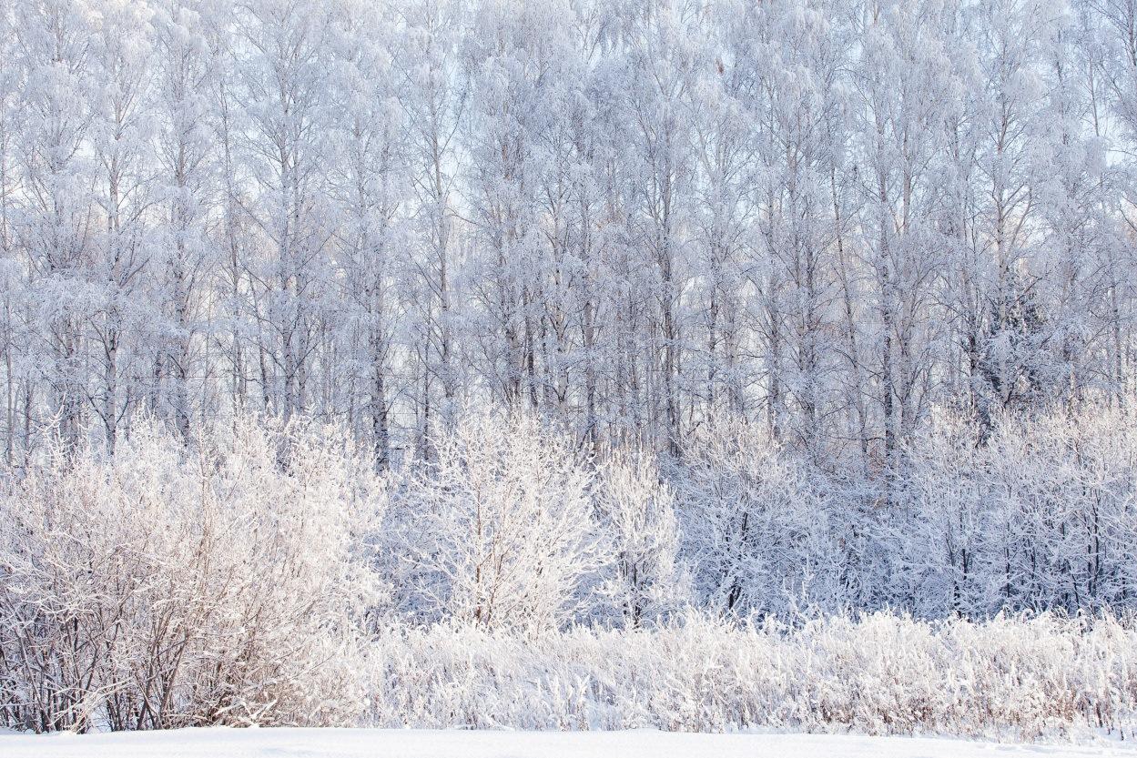 Лютый свердловский мороз: за пределами Екатеринбурга выживут только пингвины