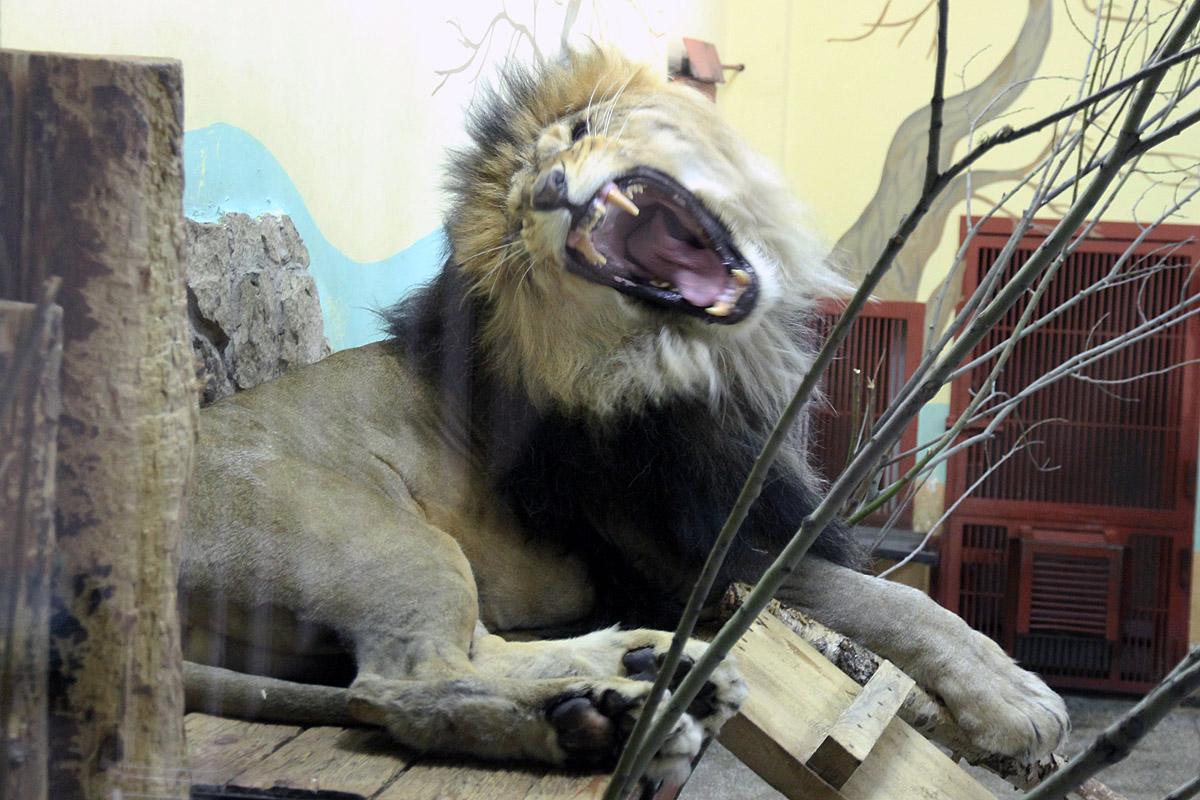 Покормить крокодила и убрать за львом: екатеринбургский зоопарк ищет сотрудников