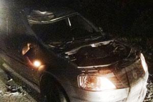 Такси сбило лося под Каменском-Уральским