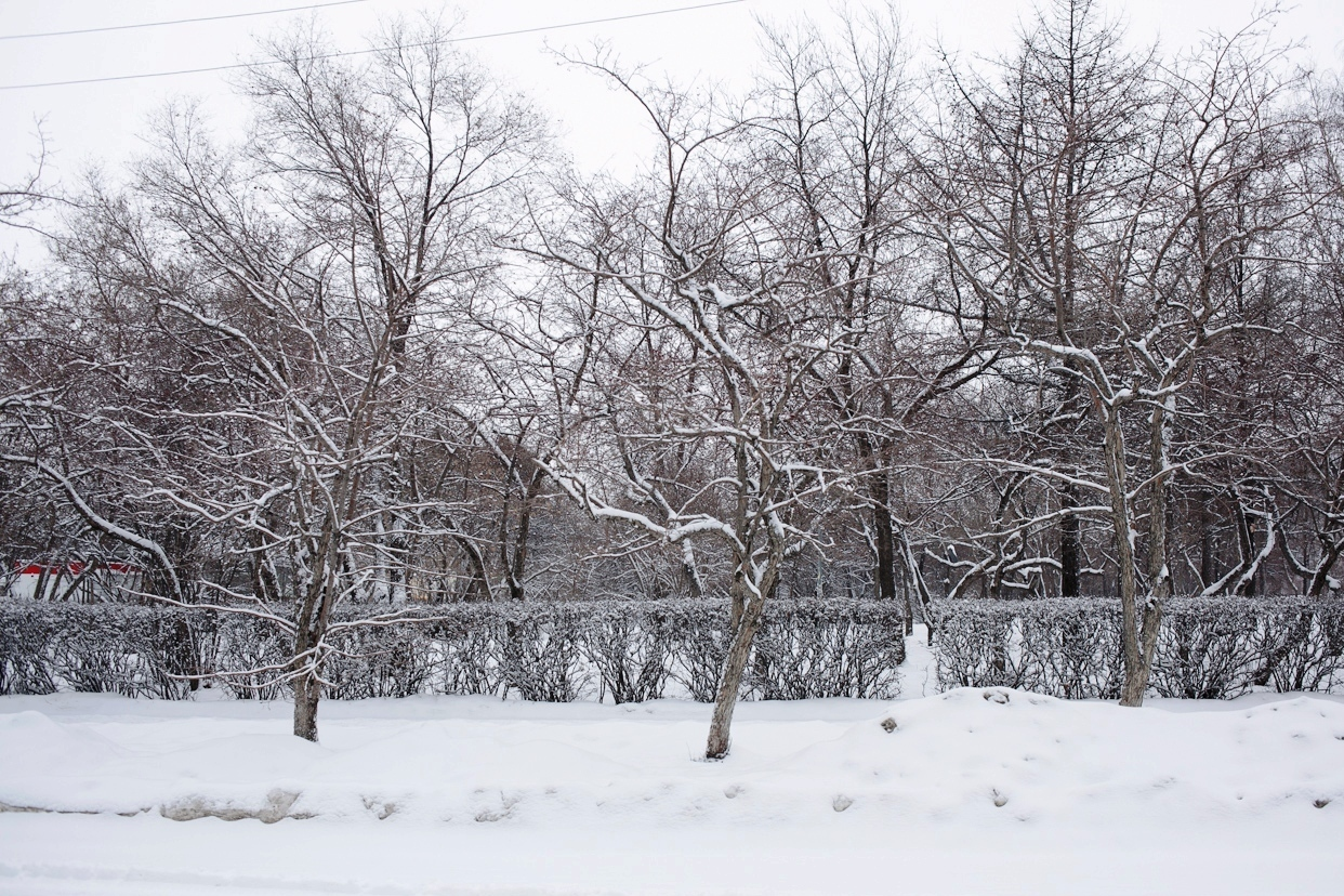 Неделя без солнца: ближайшие пять дней в Екатеринбурге будет пасмурно и прохладно