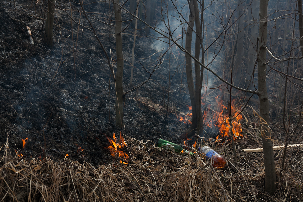 МЧС не советует ходить в лес на этой неделе