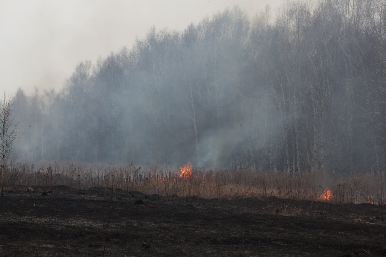 За сутки в Свердловской области произошло 24 лесных пожара