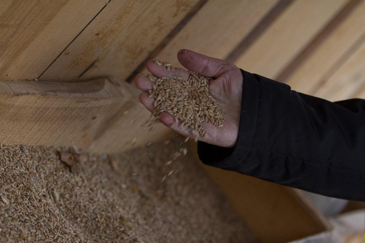 Зима близко: в Свердловской области не успевают собрать урожай