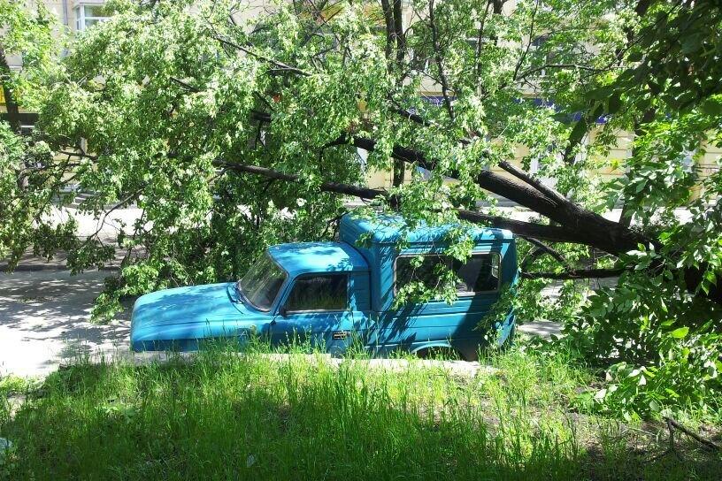 Деревом по голове: как возместить ущерб от упавших на машину веток?