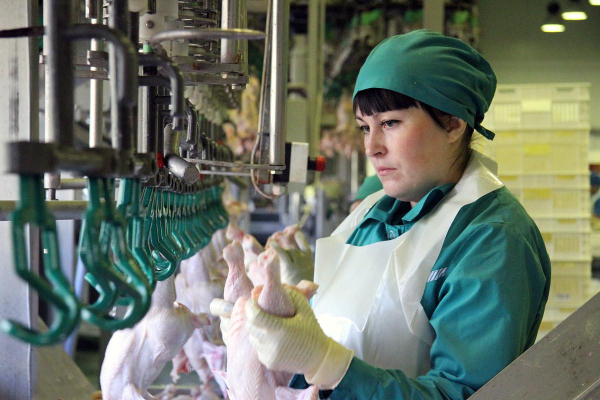 Репортаж с птицефабрики: куриные тушки и колбасы Рефтинской