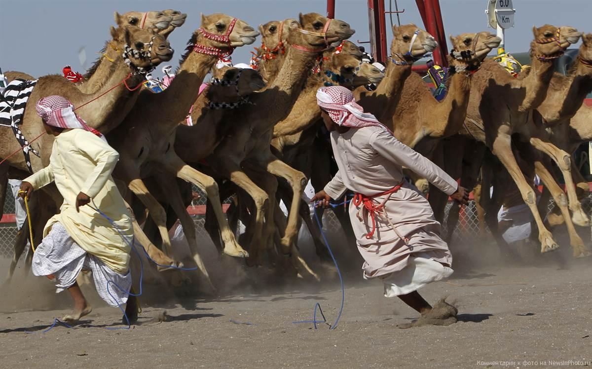 5 способов провести отпуск в октябре: верблюжьи бега, культурные ночи и гусь на закуску