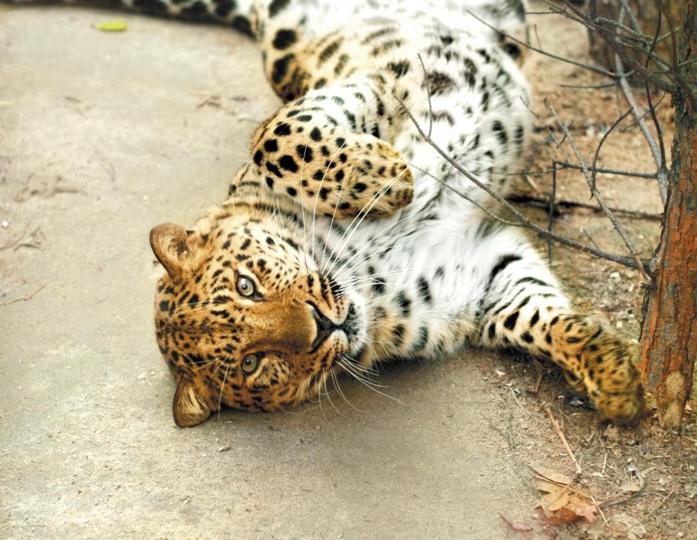 В Екатеринбургском зоопарке отметят День кошек