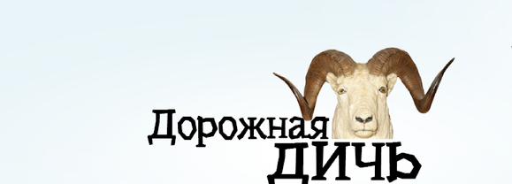 Дорожная дичь — 30: кувырки в кювет и велосипедисты на капоте