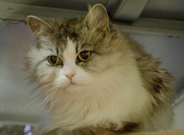 В Екатеринбурге выбрали самого красивого бездомного котика