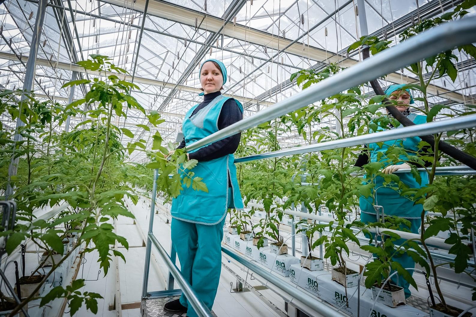 Свердловская область получит более 21 млн рублей на развитие фермерских хозяйств