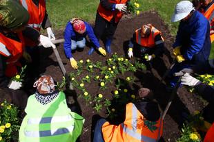 Два миллиона цветов высадили в Екатеринбурге