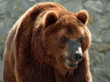 Житель Камчатки вытащил из лап медведя свою жену